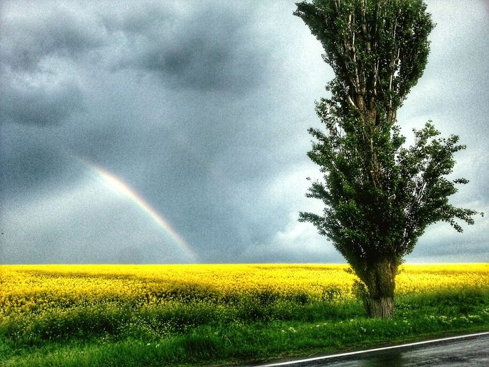 Rainbow Agriculture Beauty In Nature Field Yellow Multi Colored Freshness Nature Rural Scene Weather