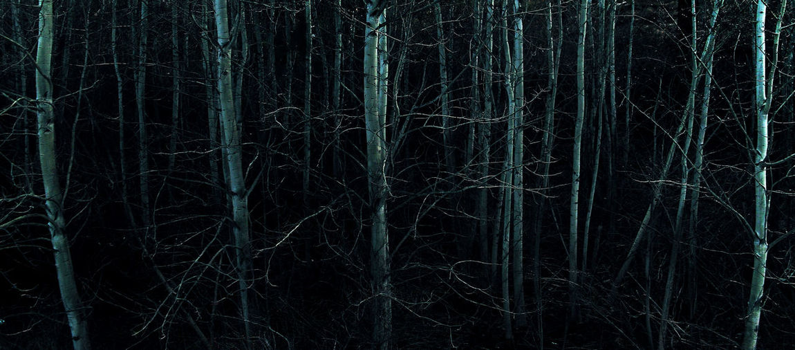 Black Background Branch Branches Branching Out Dark Places Darkness Darkness And Light Forest Forest Path Forests From My Point Of View Light In The Night Looking Looking Into The Forest Night Lights Nighttime POV Scary Scary Places White Color