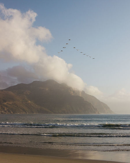 Birds flying over beach
