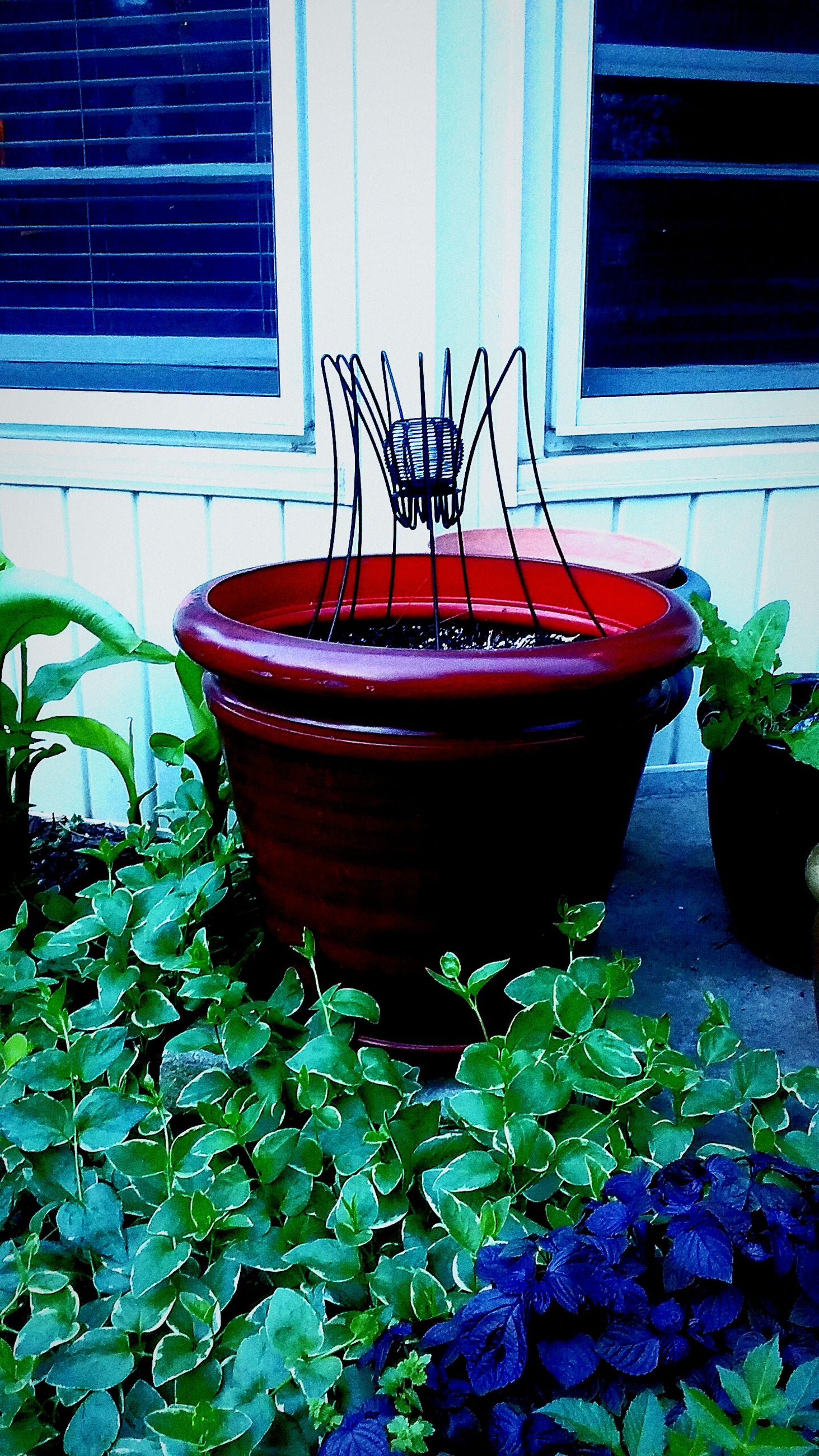 plant, built structure, architecture, building exterior, potted plant, leaf, house, growth, red, steps, front or back yard, door, brick wall, outdoors, day, no people, wall - building feature, metal, window, wood - material