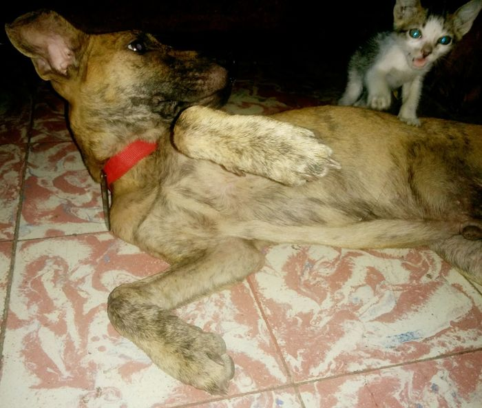 Puppy And Kitty Love Home Is Where The Heart Is
