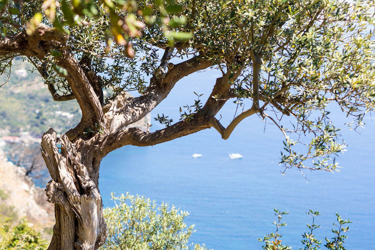A nice view when hiking around the beautiful amalfi coast. Amalfi Coast Beauty In Nature Nature No People Outdoors Tranquility Travel, Italy, Summer, Hiking, Trecking Tree Viewpoint Water