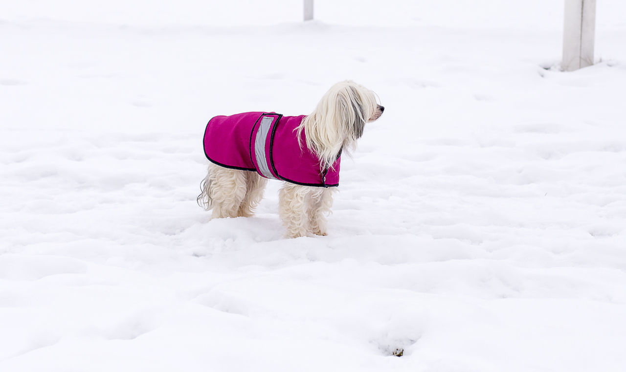 Side View Of A Dog Standing In Snow