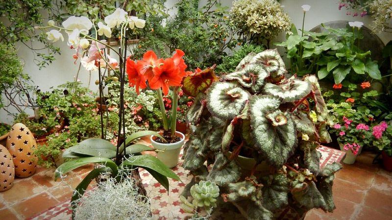 Patios De Córdoba Flower Plant Greenhouse