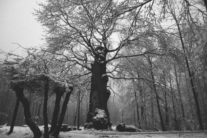 The fog and the woods. Wallacianism Fairytale  Snow ❄ Spooky Atmosphere Winter Bare Tree Beauty In Nature Blackandwhite Branch Cold Temperature Day Fog Growth Landscape Landscape_photography Mist Nature No People Outdoors Sky Snow Tranquility Tree Tree Trunk Winter Woods