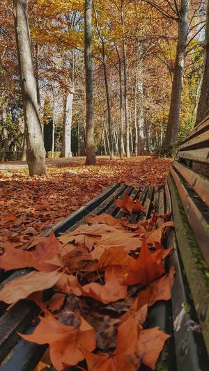 Jardín Del Príncipe, Aranjuez, Spain EyeEm Best Shots Enjoying Life EyeEmNewHere EyeEm Nature Lover Eye4photography  EyeEmBestPics EyeEm Best Shots - Nature EyeEm Masterclass Bench Sunlight First Eyeem Photo Thankful✨ Exceptional Photographs Leaves Low Angle View Beauty In Nature Nature Power In Nature Tranquility Taking Photos Tranquil Scene Autumn Autumn🍁🍁🍁 Tree Sky Idyllic Scenics Calm Orange Color