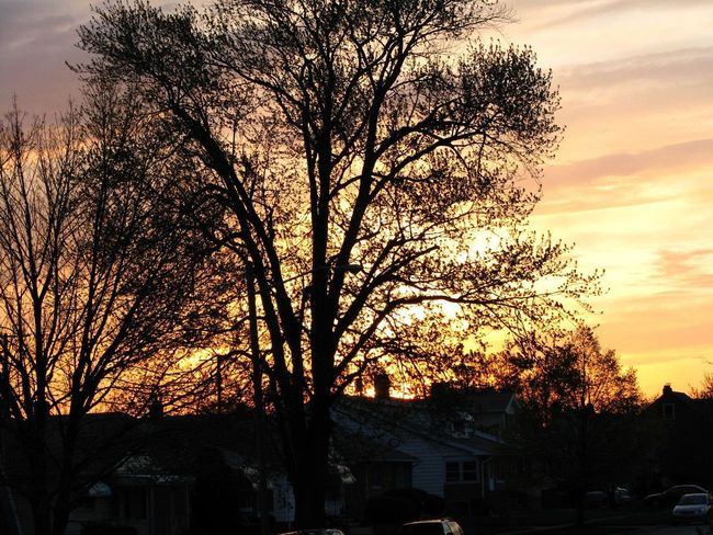 Outdoors Sunset Sky Silhouette Bare Tree Nature Beauty In Nature