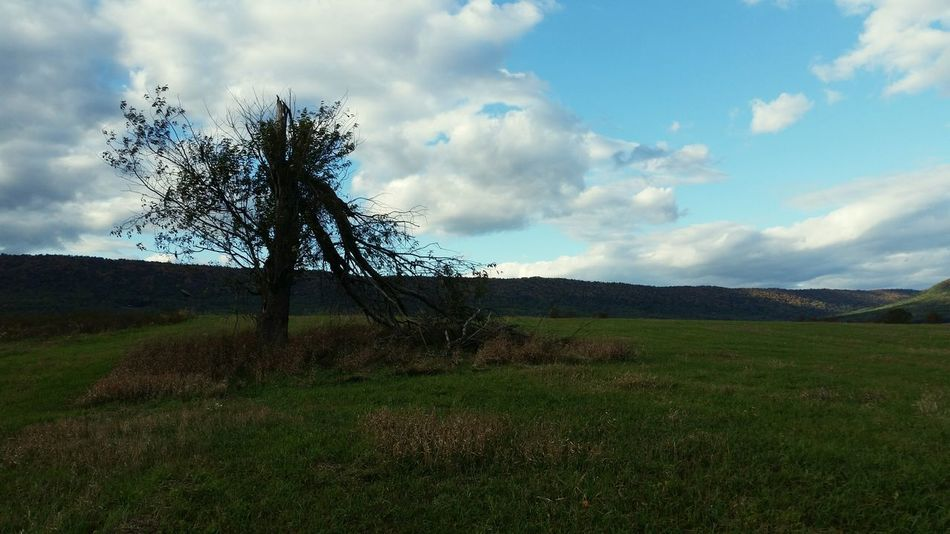 Tree Broken Clouds Nature Mountains Landscape My Best Photo 2015 Sky Askew Bright Sky Lonely Alone Time Forlorn Shadow Light And Shadow