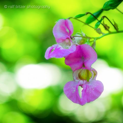 Nice Flower Fragility Freshness Growth Close-up Beauty In Nature Selective Focus Nature Pink Color Petal Springtime In Bloom Flower Head Plant Botany Outdoors