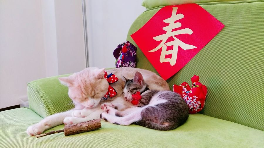 Pets Animal Themes Love 貓咪的日常 Domestic Animals Neko Meow Gato Domestic Cat Cat 毛小孩 貓 貓咪睡覺 Kitten Cute 喵星人 喵 Catoftheday Yearoftherooster Lunar New Year Chinese New Year 2017