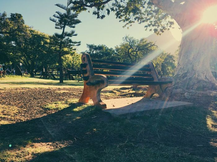Empty bench in park, Cape Town. Animal Themes Beauty In Nature Day Grass Growth Lens Flare Nature No People One Animal Outdoors Park Pets Shadow Sky Sun Sunbeam Sunlight Tree
