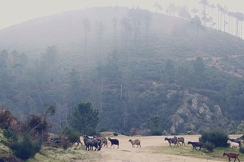 Nature On Your Doorstep Nature Mountain Sheperd Herd Animals Traveling Streetphotography Nature_collection Outdoors