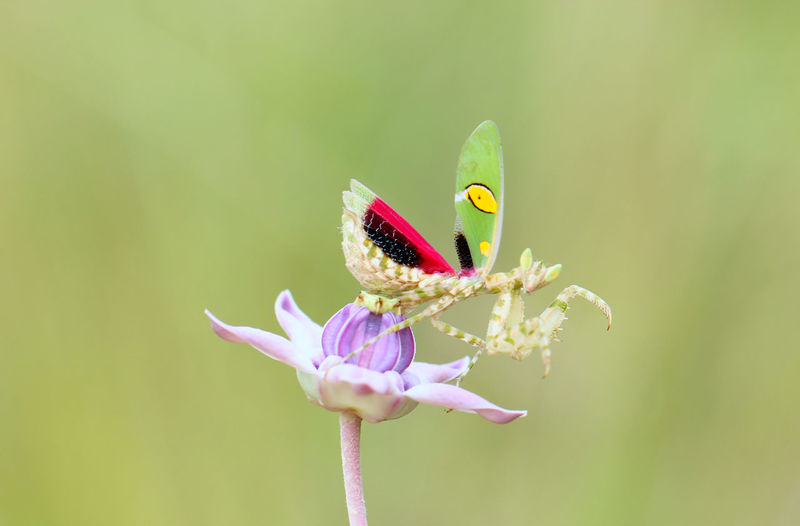 Beauty In Nature Close-up Flower Green Color Insect Mantis Pose Purple 10