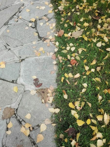 Abundance Autumn Backgrounds Botany Change Cobblestone Day Dry Fall Leaf Full Frame Geometry Ground Growing High Angle View Leaf Outdoors Pavement Paving Stone Sidewalk Springtime