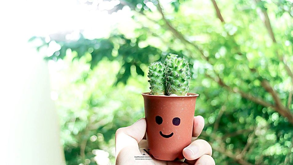 EyeEmNewHere Growth Plant Nature Cactus Cute Tree