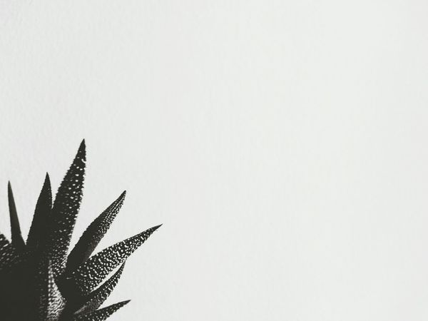 Succulents Cactus Home Sweet Home Zen Minimalobsession Blackandwhite Plants Feeling At Home