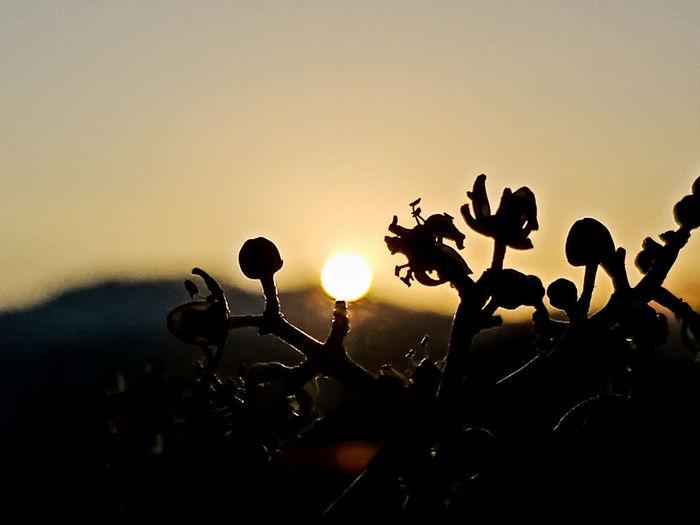 sunshine before