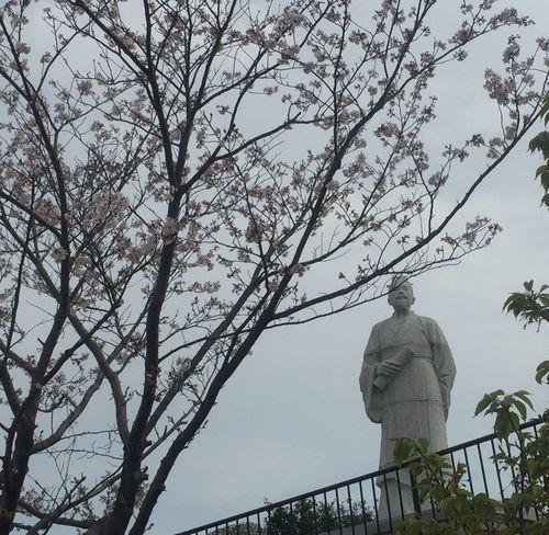 桜と徐福の像😁 Slightly scared😅 大大川昇昇開橋SSagafFukuoka春春CCherry BlossomsIImage