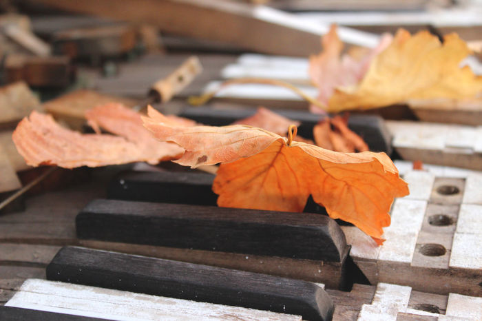 Autumn Change Day Focus On Foreground Leaf No People Old Piano Outdoors