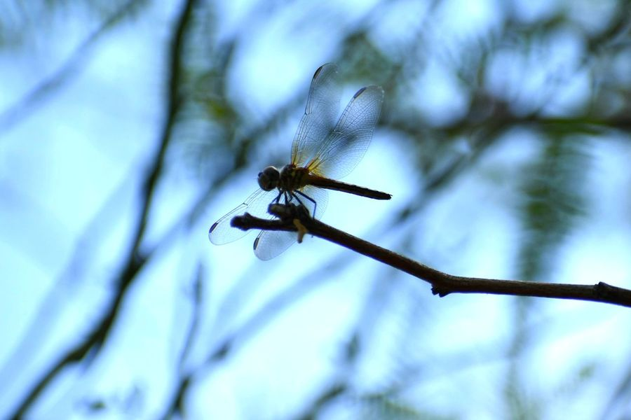 Dragonfly One Animal Insect Animals In The Wild No People Day Animal Wildlife Outdoors Technology Animal Themes Nature Close-up Sky
