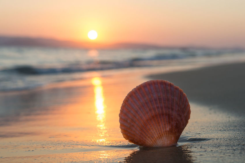 Sea shell on the beach at sunset Coastline Memories Romantic Summertime Sunlight Vacations Wave Beach Beauty In Nature Island Nature Reflection Sand Scenery Scenics - Nature Sea Seashell Seaside Shell Sky Summer Sun Sunset Tranquility Tropical