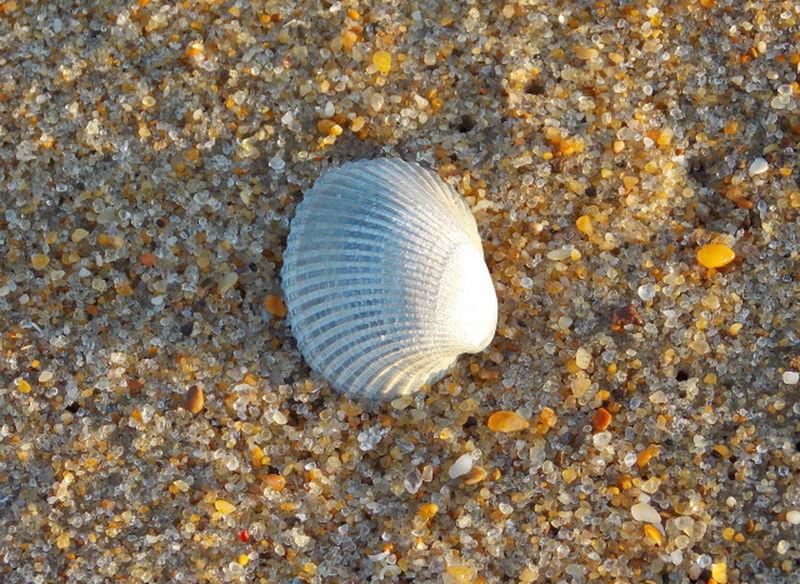 Beach Time Coastal Carolina Nikon L810 The Colors Of The Beach