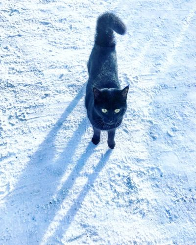 Animal Animal Themes Black Cat Cold Temperature Domestic Animals Domestic Cat Feline Looking At Camera Mammal Nature No People One Animal Outdoors Pets Snow Snow ❄ Winter Winter
