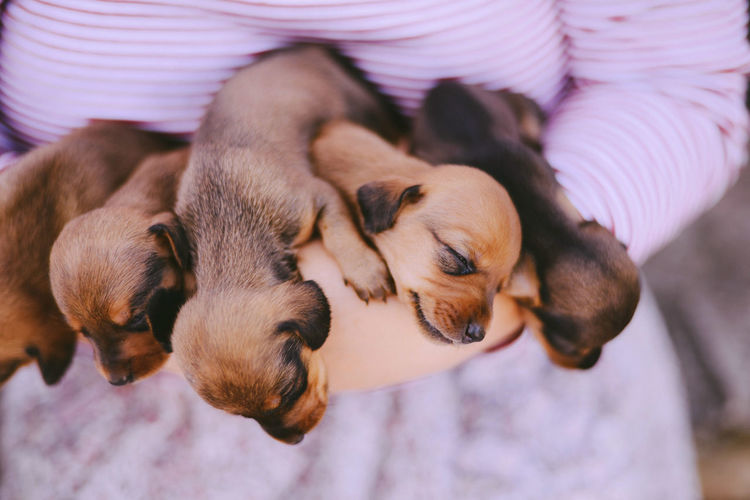 High angle view of puppies sleeping