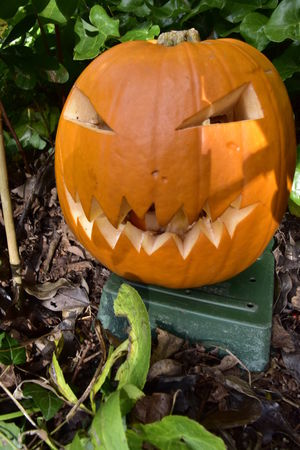 Anthropomorphic Face Autumn Beth Chato Gardens Close-up Creepy Day Elmstead Market Essex Halloween Halloween Holiday - Event Jack O Lantern Jackolantern Leaf Nature No People Orange Color Outdoors Pumpkin Vertical