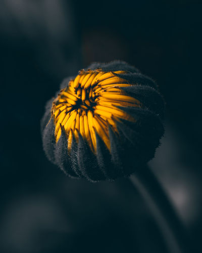 Yellow and black. Beauty In Nature Close-up Flower Flower Head Flowering Plant Focus On Foreground Fragility Freshness Growth Inflorescence Nature No People Outdoors Petal Plant Plant Stem Pollen Vulnerability  Yellow