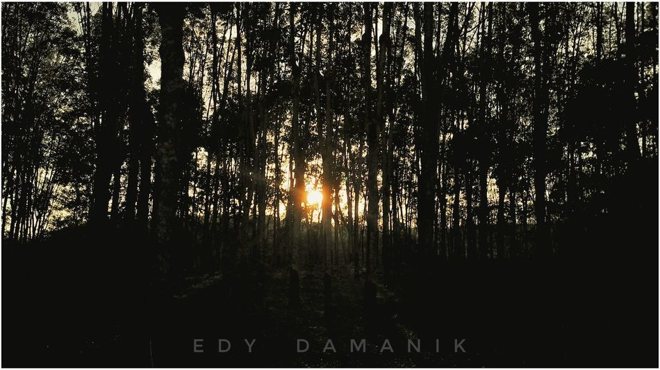 Sunset Silhouettes Indonesia_photography Silhouette Tree Forest Nature Sunset No People Tranquility Growth Outdoors Beauty In Nature Scenics Landscape Tree Area Day Sky Freshness Smartphonephotography Mi4iphotography First Eyeem Photo Snapseed Editing  Snapseeddaily Snapseedindonesia
