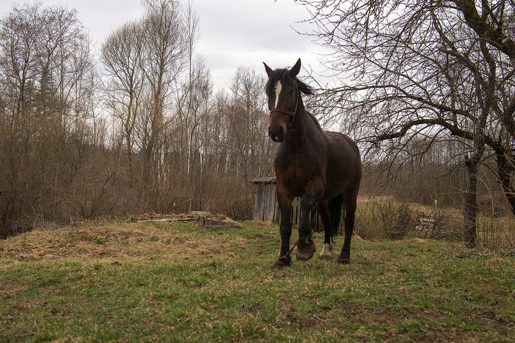 Agriculture Animal Themes Backgrounds Countryside Court Day Domestic Animals Farm Horse Latvia Mammal Mendicity Misery Nature Neglected No People Old House Outdoors Poverty Springtime Tree Yard EyeEmNewHere The Baltics Europe