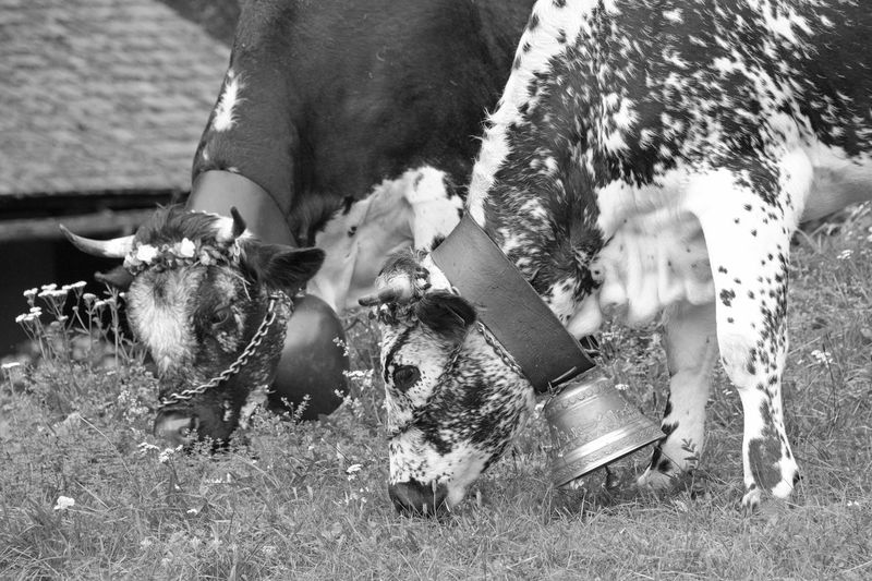 View of dogs on field