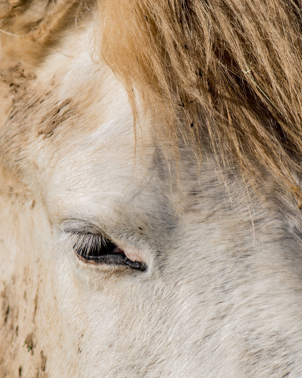 domestic animals, animal body part, one animal, livestock, mammal, animal themes, animal head, close-up, day, outdoors, no people, eyelash