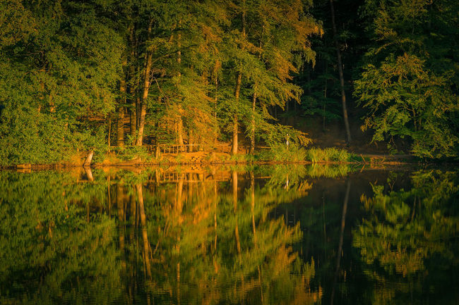 Trees are reflected in the water late summer autumn Natural Spectacle Evening Light Romantic Trees Water Reflections Beauty In Nature Reflections In The Water Scenics - Nature