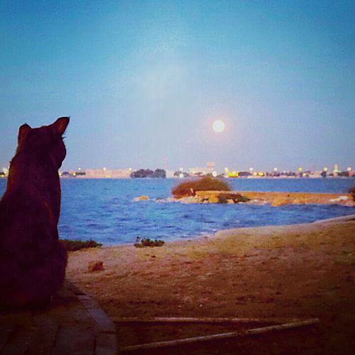 Cat Animals Sunset Bahrain Samsung galaxy S4 Zoom