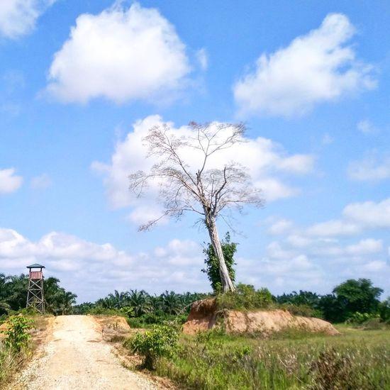 single fighter Sky Single Tree Treetop Long Shadow - Shadow Lone