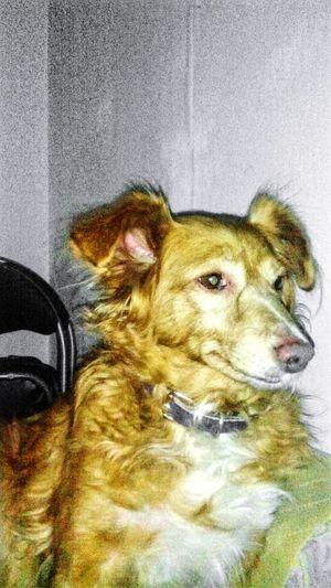My Dog camilla