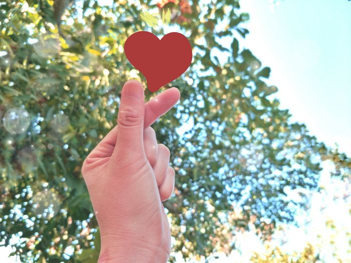 Cropped image of person holding heart shape against trees
