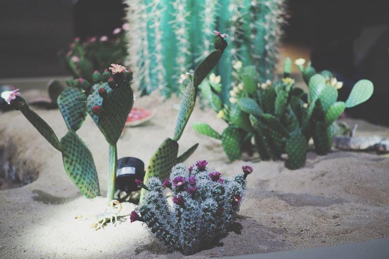 Cactus in sand.