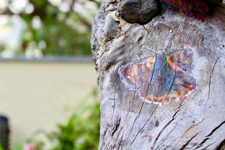 Painted Butterfly on Tree Bark Brown Butterfly Close-up Day Focus On Foreground Natural Pattern Nature No People Orange Color Outdoors Plant Plant Bark Rough Shape Strengh Textured  Tree Tree Stump Tree Trunk Trunk Wood - Material