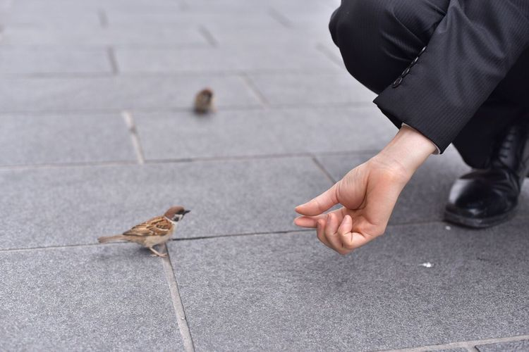 Human Hand One Person One Animal Real People Human Body Part Focus On Foreground Bird Holding Men Day Outdoors Animals In The Wild Perching Close-up One Man Only Mammal Adult People