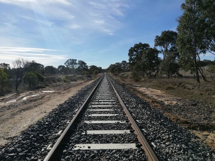 Empty railroad track along trees