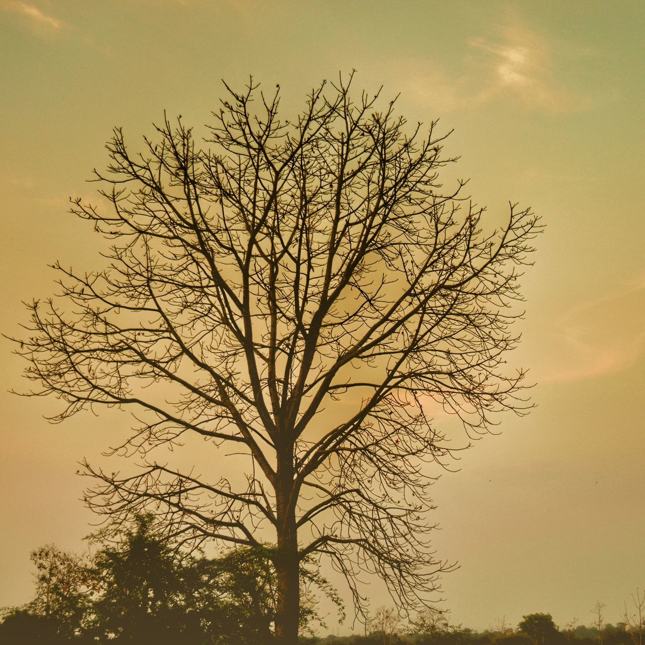 tree, tranquility, branch, bare tree, nature, beauty in nature, sky, lone, tranquil scene, sunset, outdoors, no people, scenics, day