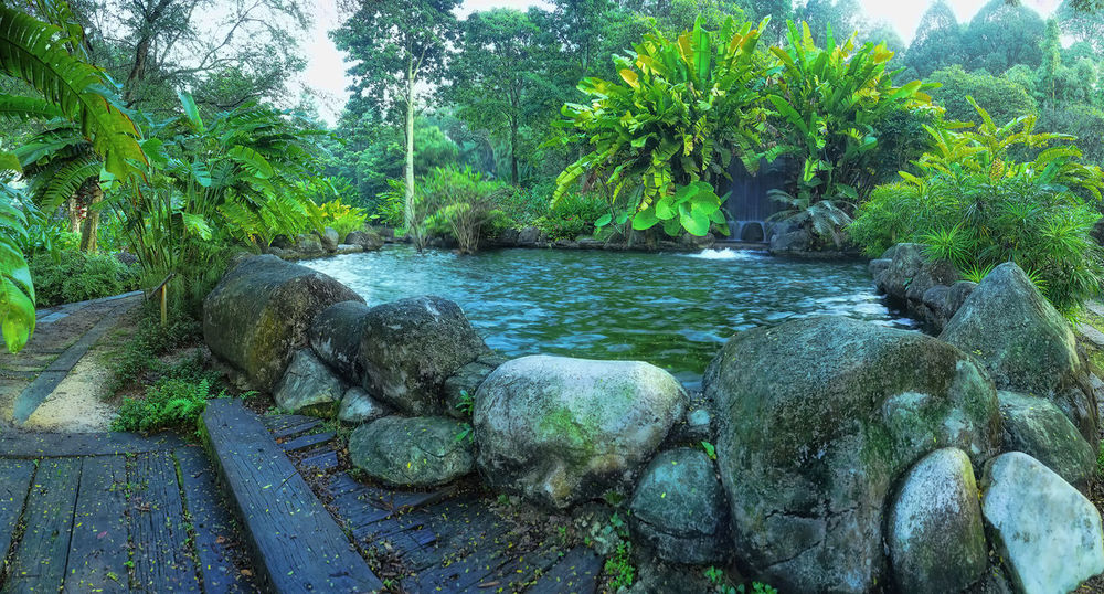 Flowers,Plants & Garden Garden Photography Green Color Growing Landscape Landscape_Collection Landscape_photography Lush Foliage Mini Zen Garden Nature No People Outdoors Pond Ponds Relaxing Moments Scenic View Stones Tree Tropical Tropical Climate Water Waterflow