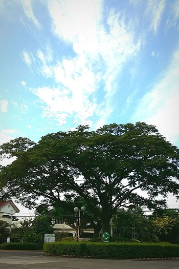 Naturephotography Davao City Daylight Tree And Sky