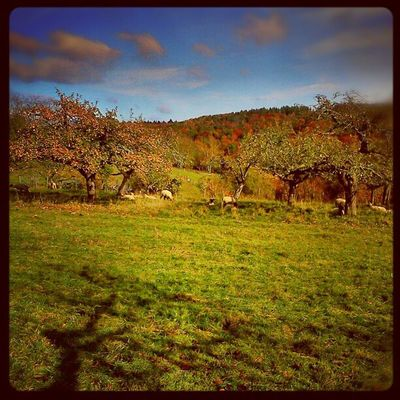 Herbst Eisenbach Obernburg Walk