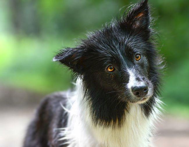 Cute Nature_collection Eyeemphotography EyeEm Selects EyeEm Best Shots Dogs Of EyeEm Dog Border Collie