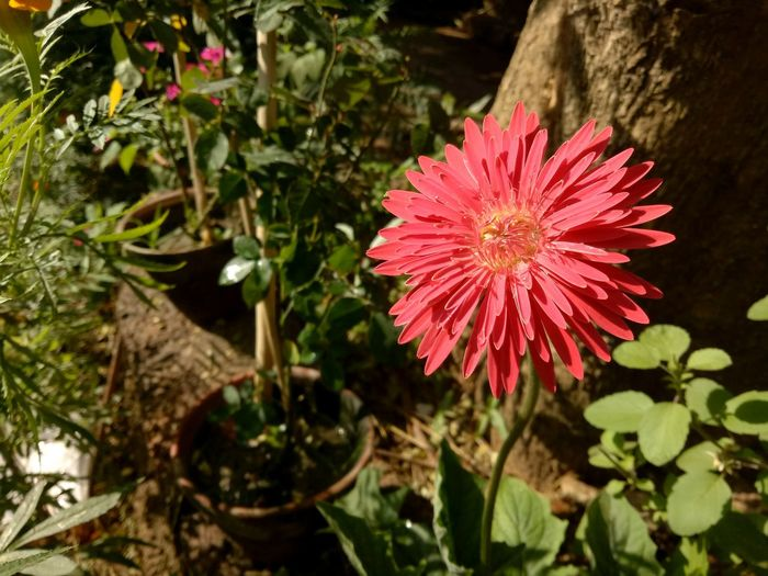 Clicked by me Nature Beauty In Nature Plant Fragility Close-up Outdoors Freshness Selective Focus Blooming Blossom
