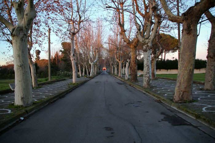 winter in italy Street No Cars  Roadway Shades Of Winter Tree The Way Forward Outdoors Day Bare Tree No People Sky Nature Beauty In Nature